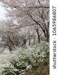 spring season flowers. | Shutterstock . vector #1065986807