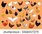 various chicken breeds poultry... | Shutterstock .eps vector #1066017275