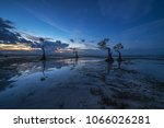 reflection of mangrove tree...   Shutterstock . vector #1066026281