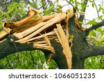 Fallen Tree  Broken And...