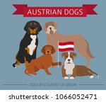 dogs by country of origin.... | Shutterstock .eps vector #1066052471