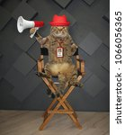 Small photo of The cat director in a red hat with a megaphone sits on the chair.