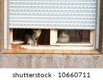 Stock photo pair of cats on old window 10660711