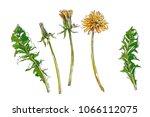 vector set of botanical... | Shutterstock .eps vector #1066112075
