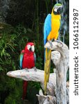 Scarlet Macaw Parrot On Tree...