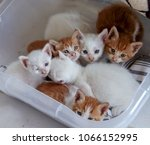 Stock photo baby cats kittens are look like ill someone s eyes are very bad and sick new born pets are very 1066152995