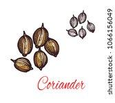 coriander seed sketch of... | Shutterstock .eps vector #1066156049