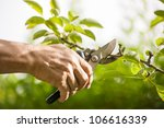 Pruning Of  Trees With...