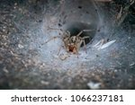 Small photo of A large spide with a web deep in a bush