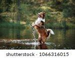 beautiful border collie dog... | Shutterstock . vector #1066316015
