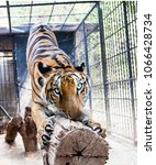 the big bengal tiger | Shutterstock . vector #1066428734
