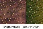 olive fields in morocco in... | Shutterstock . vector #1066447934