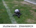 closeup view of iron ball on...   Shutterstock . vector #1066468424