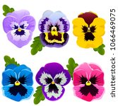 Stock vector pansy set of spring flowers bright flowers and leaves collection flower elements vector 1066469075