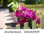 Petunia Flowers On A Decorativ...
