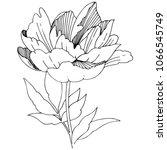wildflower peony flower in a... | Shutterstock .eps vector #1066545749