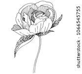 wildflower peony flower in a... | Shutterstock .eps vector #1066545755