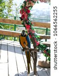 Small photo of Parrot Ara sitting on a perch in a photozone near a flower arch in the form of a heart on a sunny day