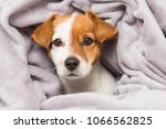 portrait of a cute young small...   Shutterstock . vector #1066562825