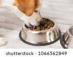 cute small dog sitting and... | Shutterstock . vector #1066562849
