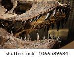 the skeleton of the dinosaur is ... | Shutterstock . vector #1066589684