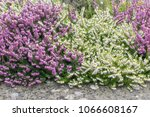 old concrete border with... | Shutterstock . vector #1066608167
