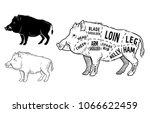 wild hog  boar game meat cut... | Shutterstock .eps vector #1066622459