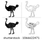 ostrich meat cuts with elements ...   Shutterstock .eps vector #1066622471