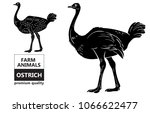 ostrich meat cuts with elements ... | Shutterstock .eps vector #1066622477