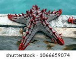 Spiny Red Starfish