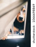 Small photo of Funny serious dog looking trow window from outdoor