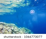 observation of jellyfish during ... | Shutterstock . vector #1066773077