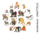 monkeys types icons set.... | Shutterstock .eps vector #1066775111