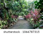 walkway and colorful leaves in... | Shutterstock . vector #1066787315