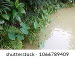 green leaves with pond in the... | Shutterstock . vector #1066789409