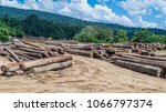 log yard of rain forest... | Shutterstock . vector #1066797374