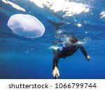 observation of jellyfish during ... | Shutterstock . vector #1066799744
