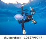 observation of jellyfish during ... | Shutterstock . vector #1066799747