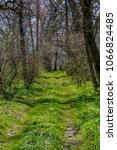 Small photo of Woodland walking and hiking pathway with tall trees at early spring. Early spring landscape. A woodland pathway leading through tall trees.