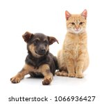 Stock photo black dog with a kitten isolated on a white background 1066936427