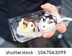 steamed buns that look like...   Shutterstock . vector #1067063099