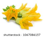 Zucchini Flowers On A White...