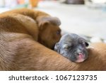 A Puppy Is Sleeping With Bitch