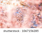 beautiful floral spring... | Shutterstock . vector #1067156285