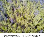 drone view on the deciduous... | Shutterstock . vector #1067158325