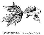 goldfish line art | Shutterstock .eps vector #1067207771