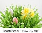 spring grass stock images.... | Shutterstock . vector #1067217509