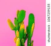 green cactus on pink.  | Shutterstock . vector #1067259155