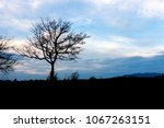 silhouette of nature tree and... | Shutterstock . vector #1067263151