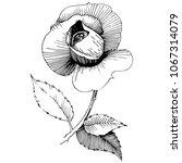 wildflower rose  flower in a... | Shutterstock .eps vector #1067314079